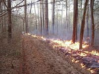 cape fear timber fire break