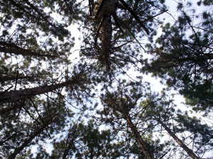 Cape Fear Timber Company Timber Appraisals